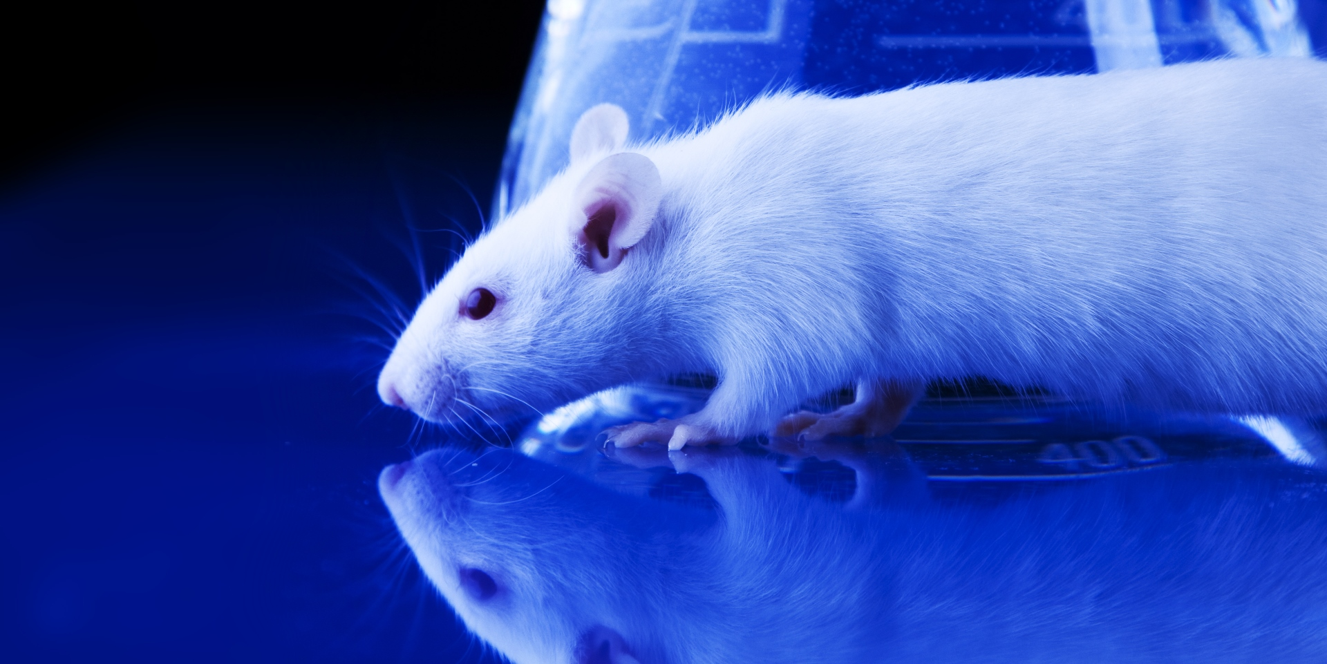 PolyGene Rat Model Service
