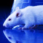 Rat Transgenesis